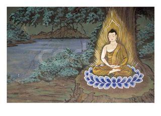 Buddha-tree25